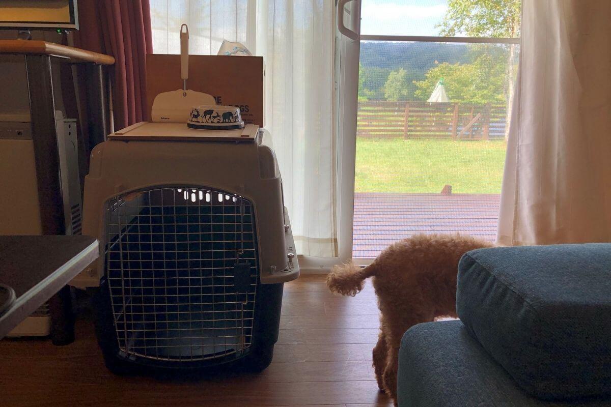 エンゼルフォレストレイクサイドドッグヴィラの犬用アメニティ